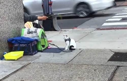 暖心街友收養小浪喵!省吃儉用「只為帶牠看醫生」 和路人聊貓竟意外「獲工作機會」